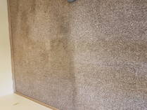 Fall Carpet Cleaning Specials Winnipeg City Carpet Cleaning 1