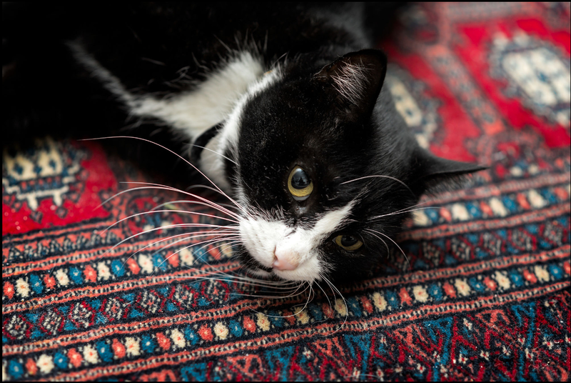 Your rugs are precious to you, and they're precious to us as well. We ensure that everything we use is safe for every family member, from the tiniest kitten to the big fellow with chemical sensitivities. Wool, silk, cotton, jute or synthetic, you're in go